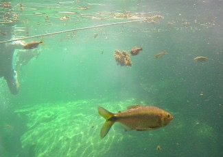 Snorkel snap